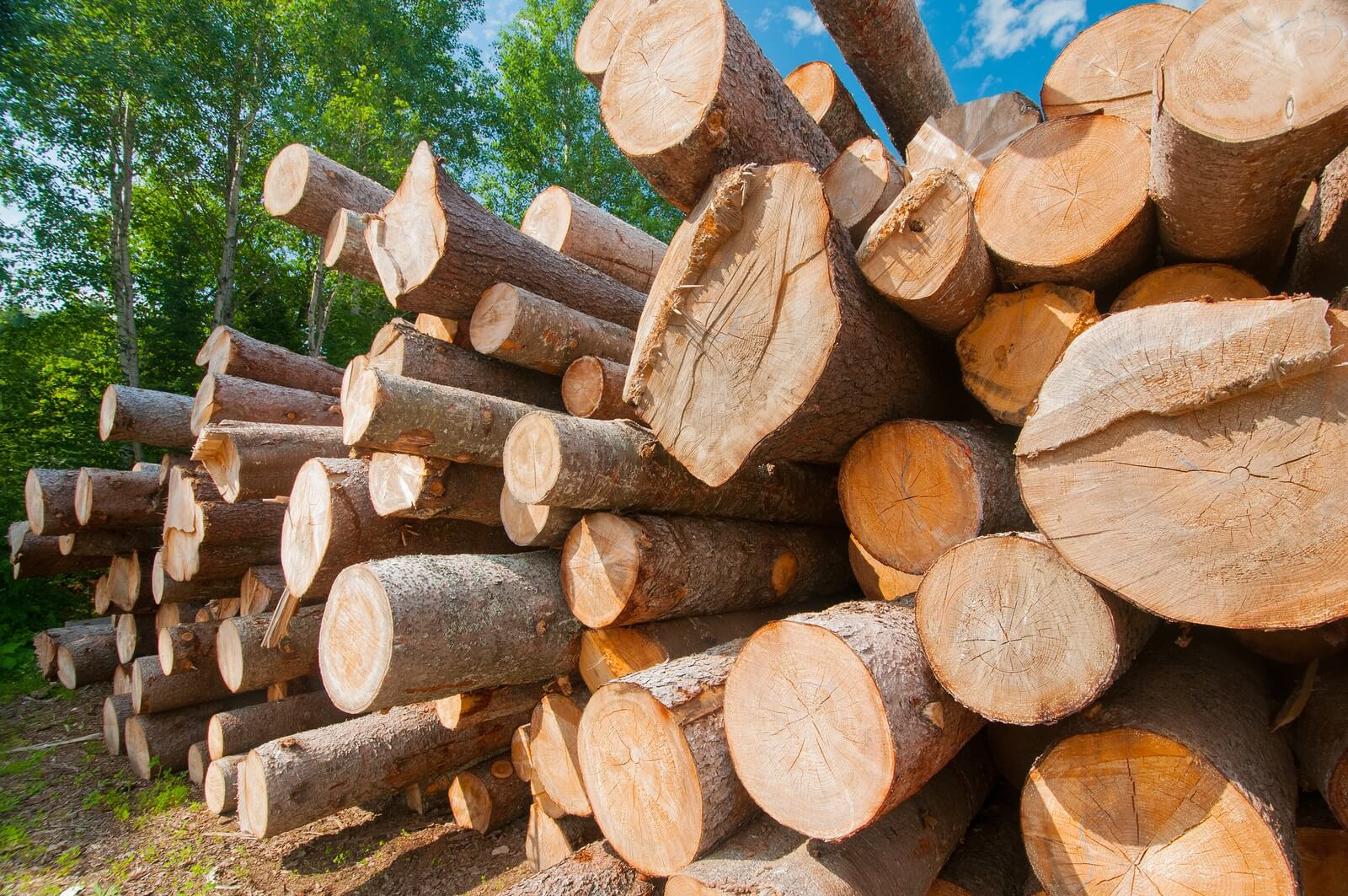 softwood lumber The softwood lumber board's (slb) ability to increase the market demand for softwood lumber boosts industry roi, maintains forests as forests, creates new jobs and.